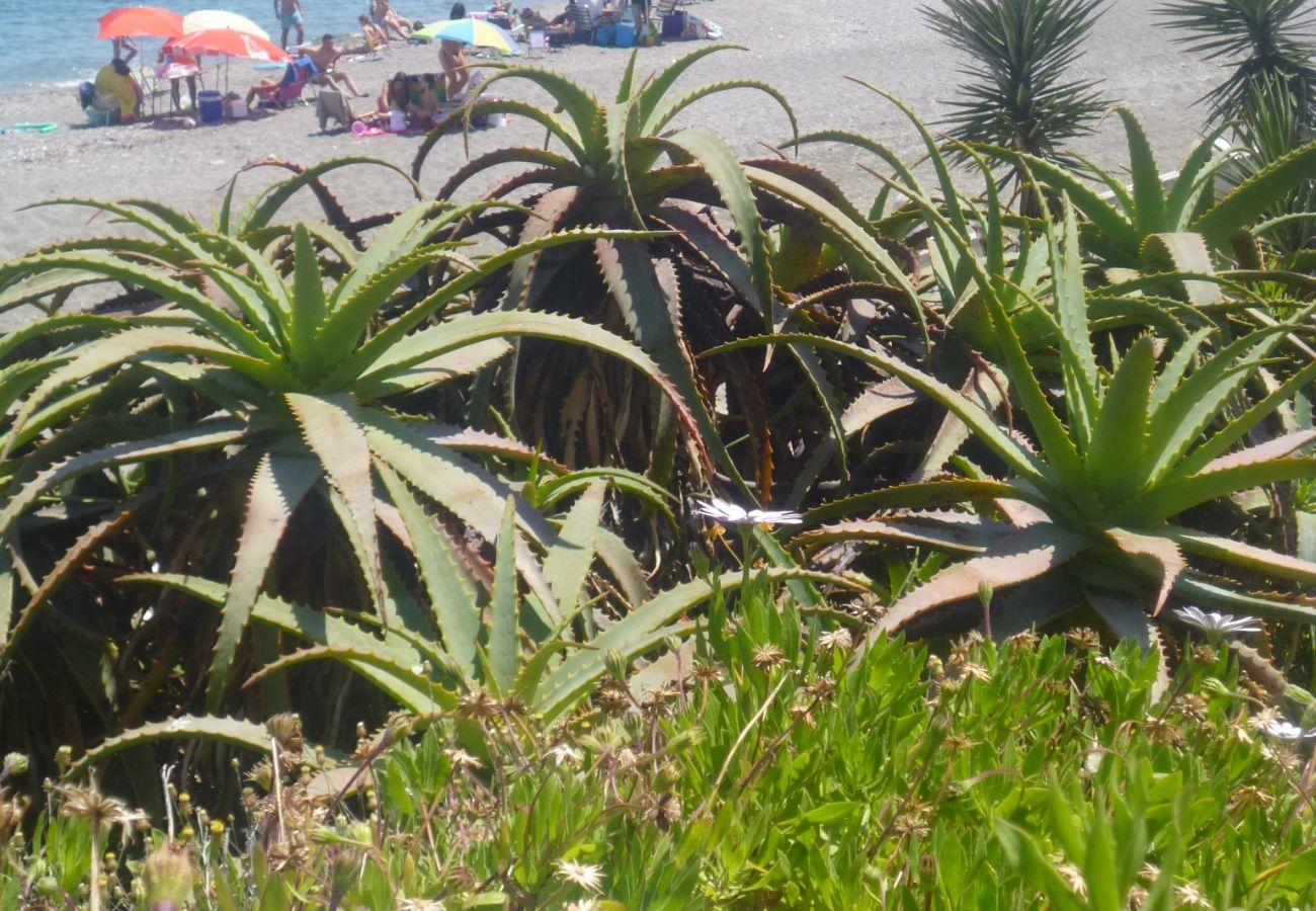 Ferienwohnung in Manilva - Boqueron 2001